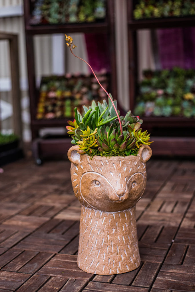 Bear Head Planter With Succulent