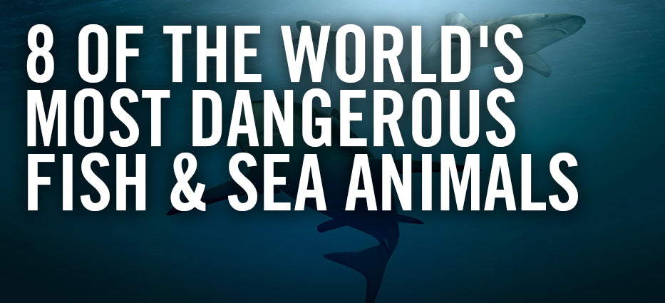 What are the most dangerous sea animals