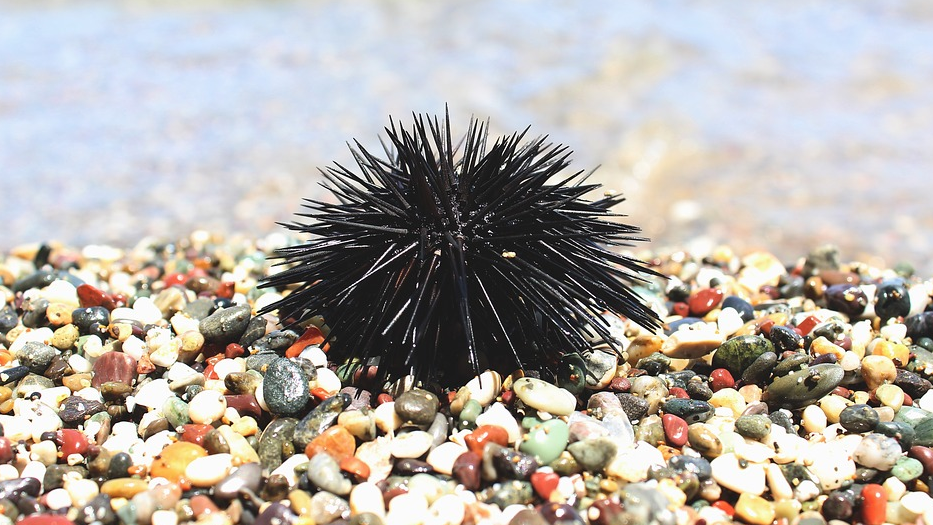 8 of the World's Most Dangerous Fish and Sea Animals sea urchin