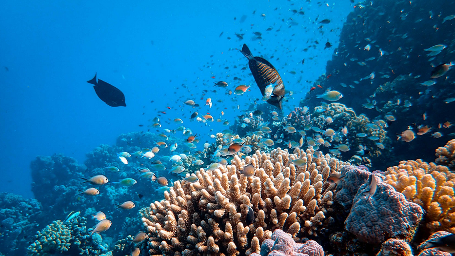 8 of the World's Most Dangerous Fish and Sea Animals stone coral