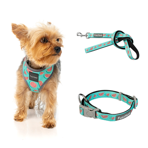 Summer Punch Bundle Harness + Lead + Collar