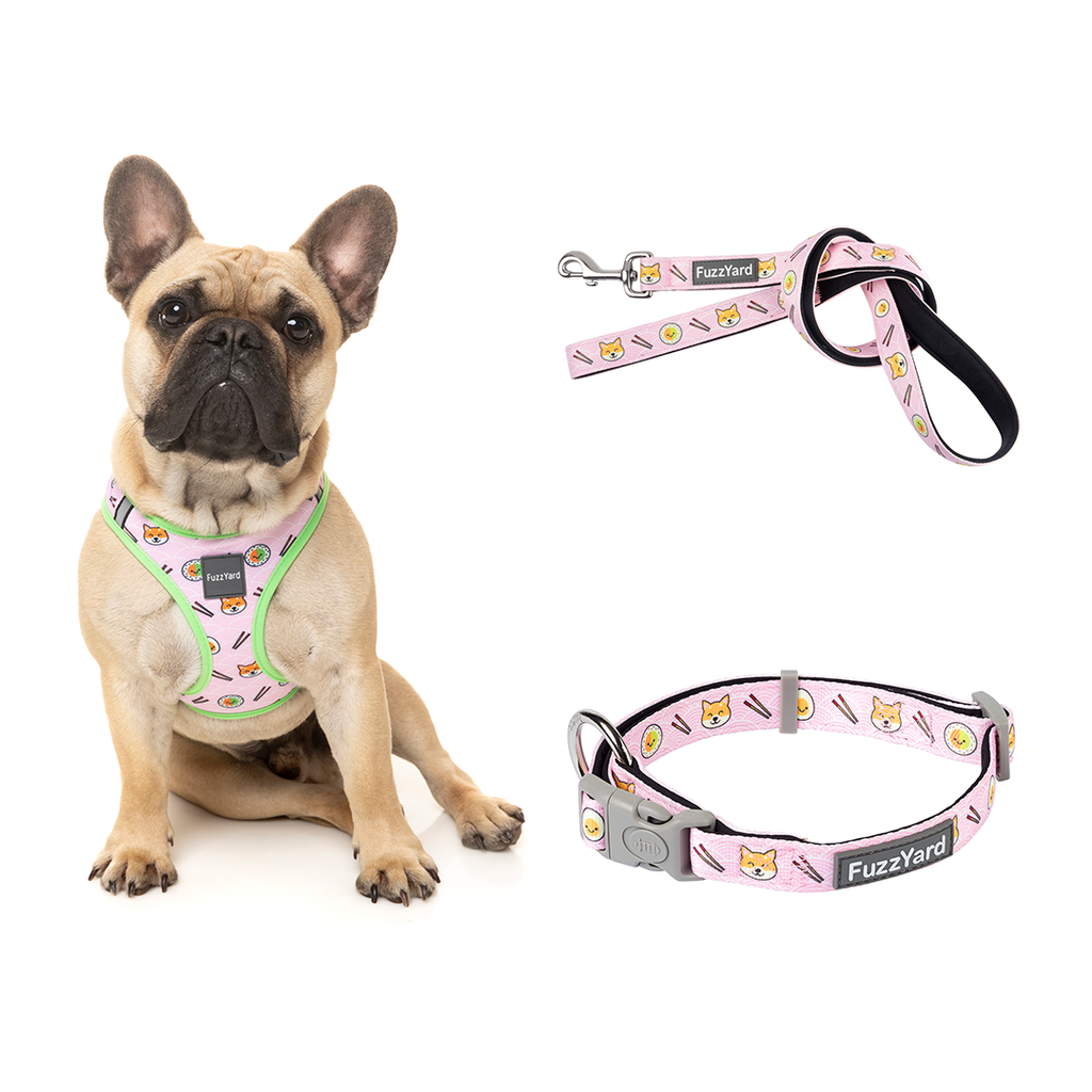 Sushiba Bundle Harness + Lead + Collar