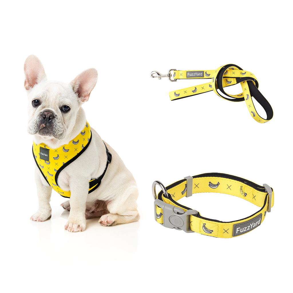 Monkey Mania Combo Harness + Lead + Collar
