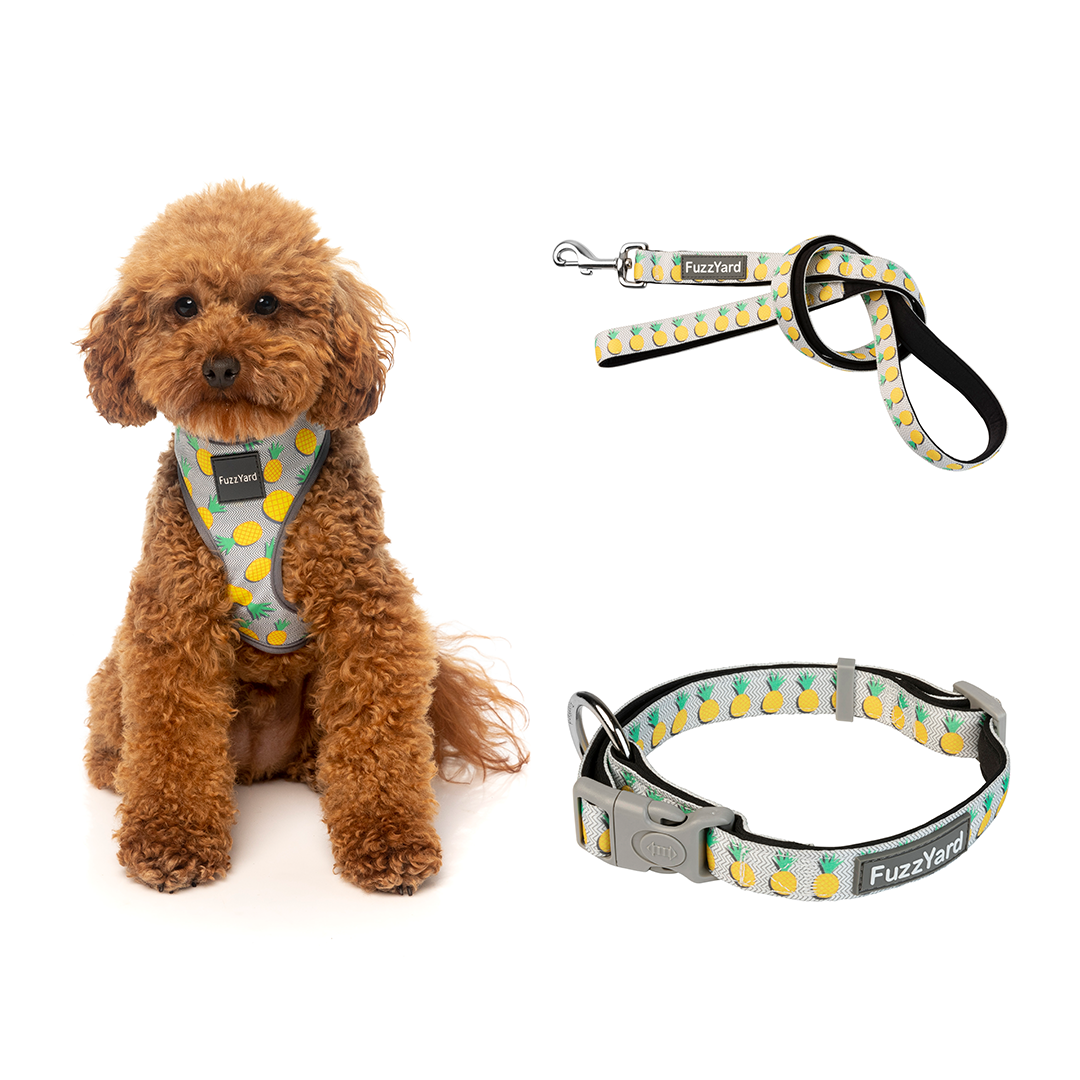 Pina Colada Bundle Harness + Lead + Collar
