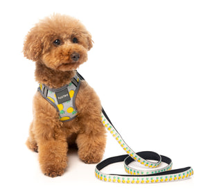 Pina Colada Combo Harness + Lead