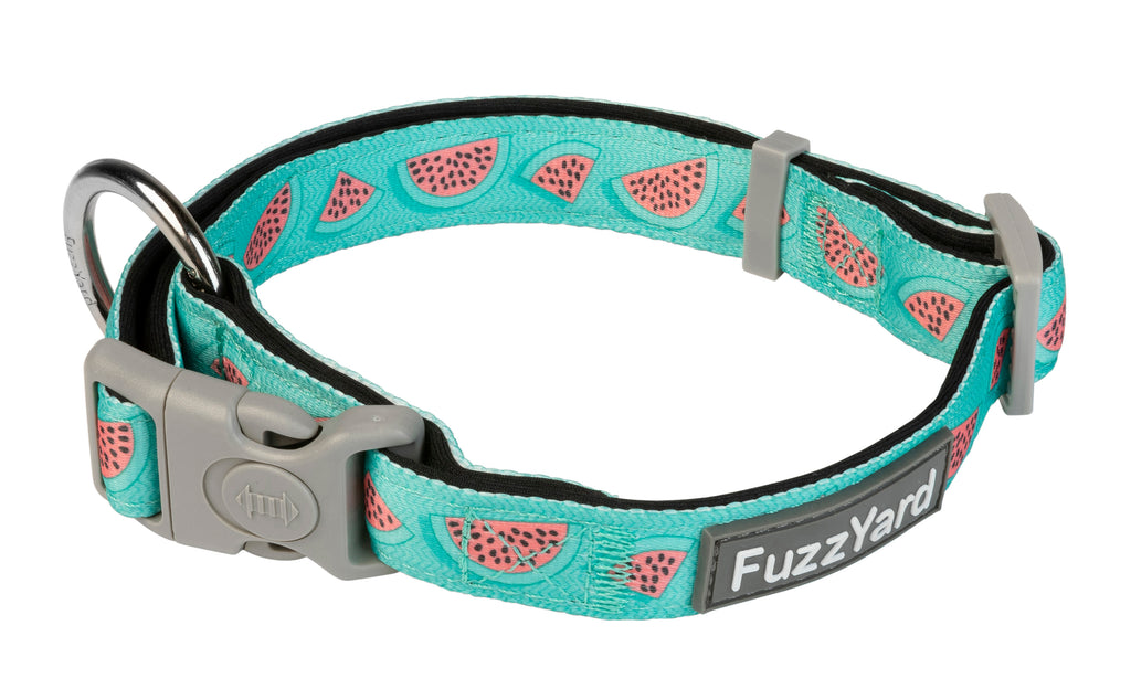 Summer Punch Dog Collar