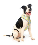 Pina Colada Harness