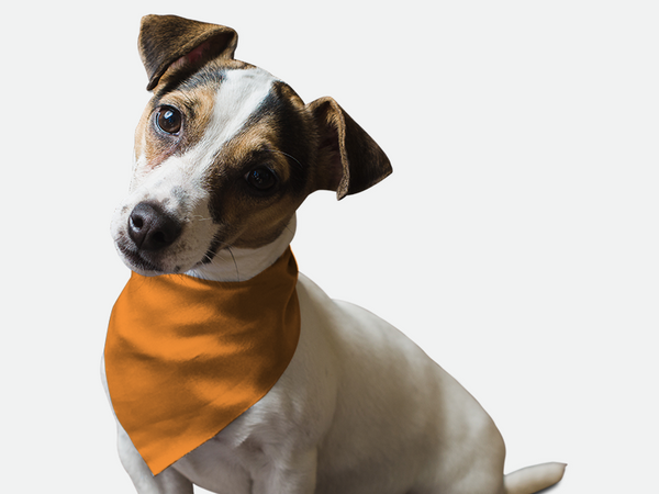 Florida Orange Bandoggies® Pattern