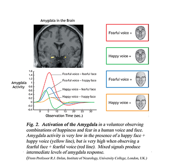 activation of the amygdala