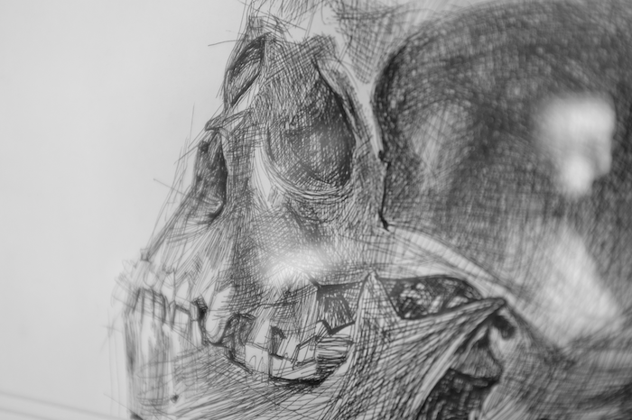 A pen and ink sketch of a skull
