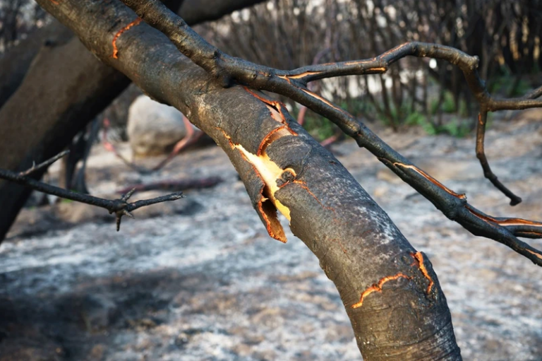 An image of a burnt tree branch, from Xiaowen Zhu's series The Last Wildfire