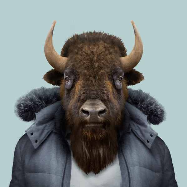 Zoo Portrait : Bison