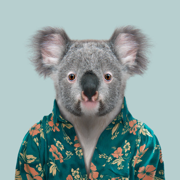 Zoo Portrait : Koala