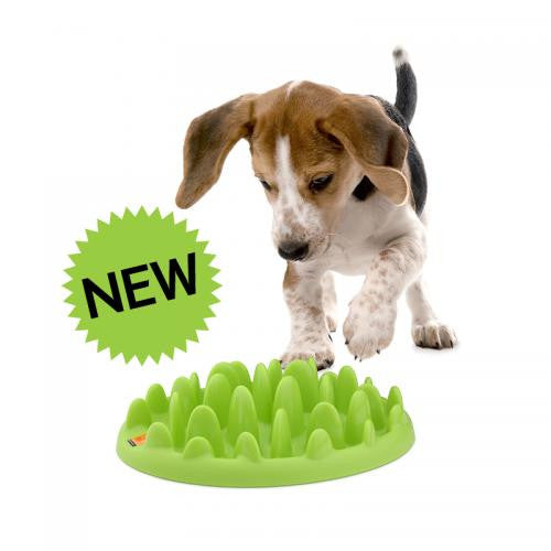 Green Mini Feeder dog bowl