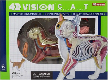 Cat 4D Vision Anatomy Model