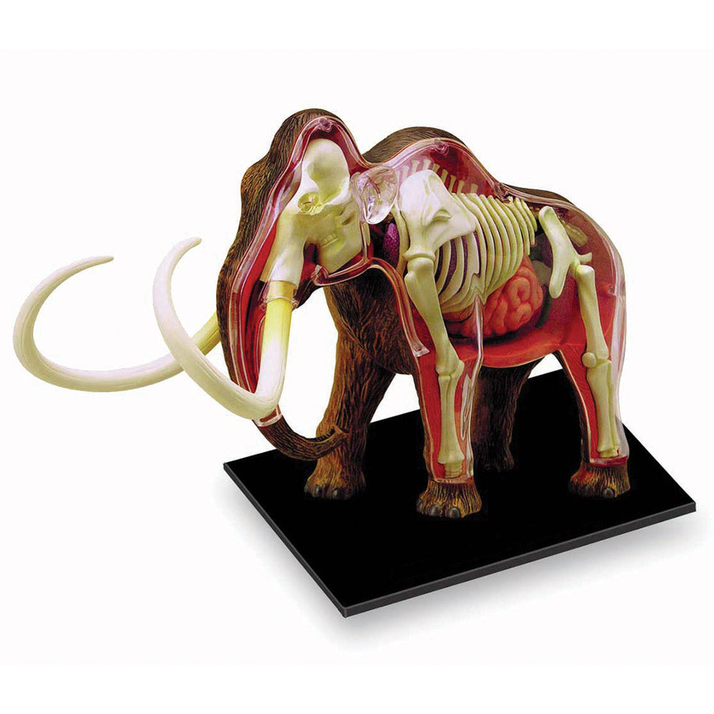 Wooly Mammoth 4D Vision Anatomy Model