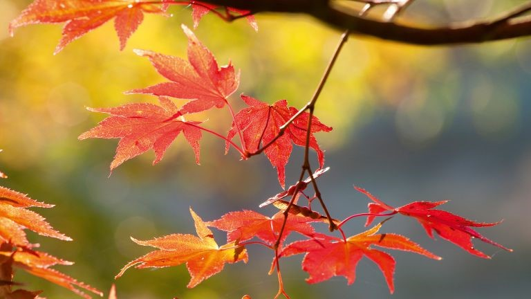 Early Autumn Holidays, Special Days And Observances