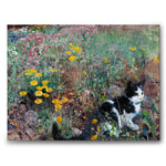 Cat on a Flowery Meadow - Canvas
