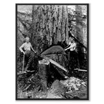 Swedish Forest Workers