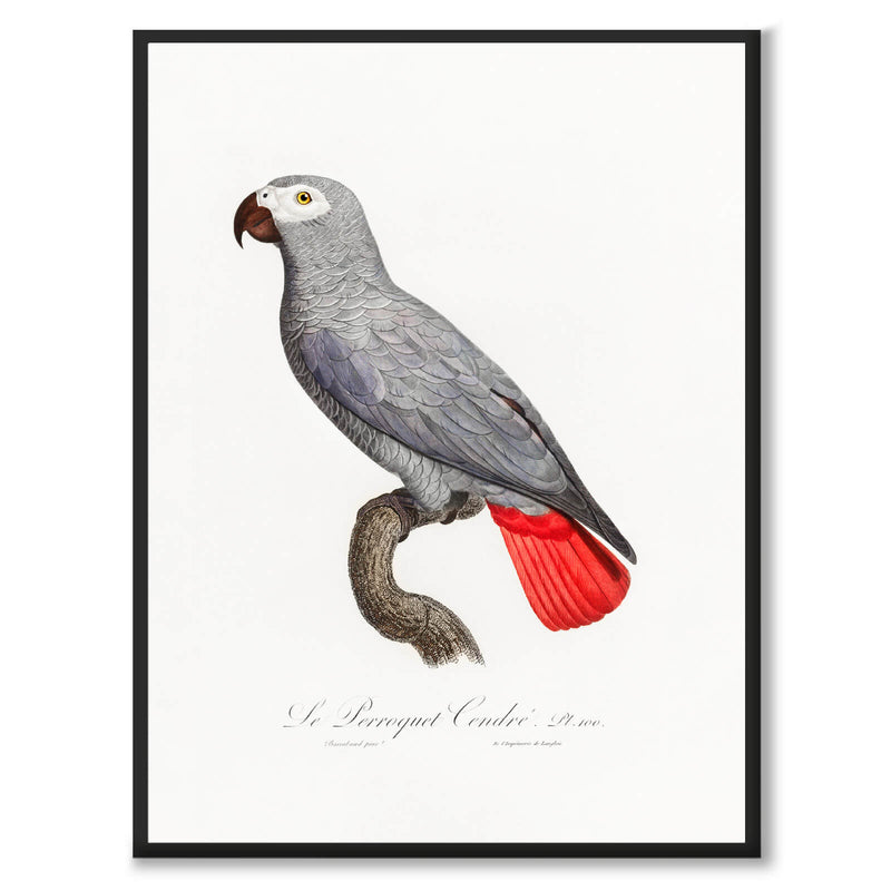 The Grey Parrot - Historly AB