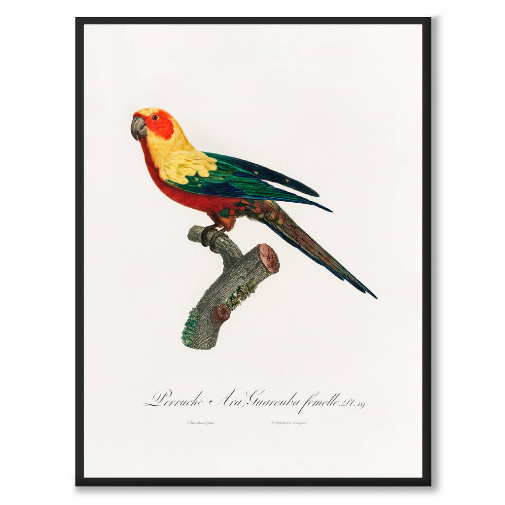 The Sun Parakeet - Historly AB