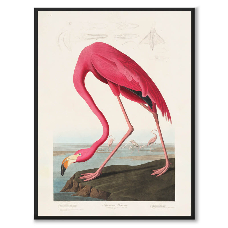 Flamingo - Historly AB