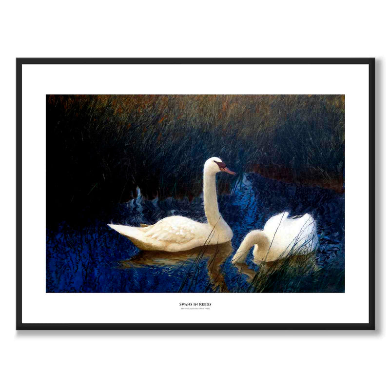 Swans in Reeds