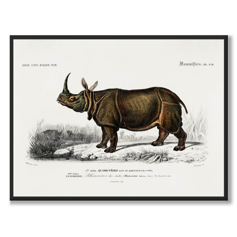 Rhinoceros - Historly AB