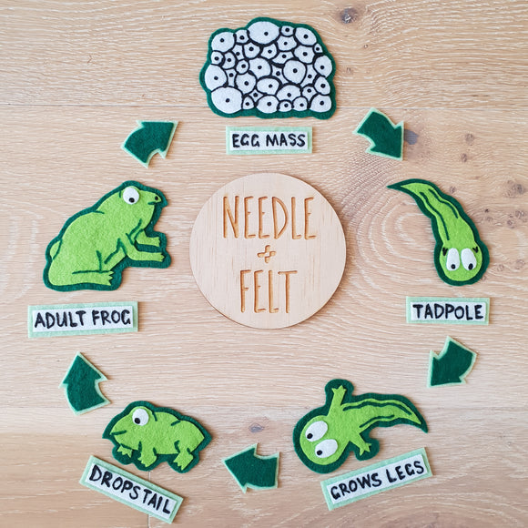 Frog Life Cycle Felt Board Kit