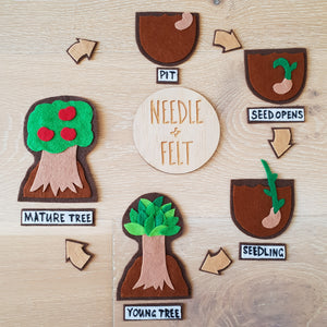 Plant Life Cycle Felt Board Kit