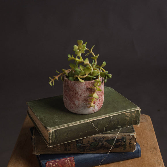 Miniature Potted Succulent-hill Interiors-Poppy Stop