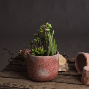 Potted Cacti and Succulent-hill Interiors-Poppy Stop
