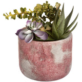Potted Succulent-hill Interiors-Poppy Stop