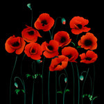 Lodi Poppies EZ Gift Box 10x10x8 Inches - ezgiftbox