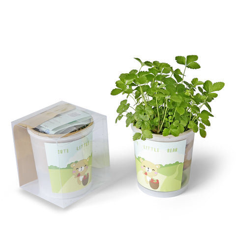 [SG Seller] - Mini plant home office indoor plant for children birthday teachers day Christmas gift