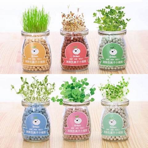 [SG Seller] - Mini Glass Jar plant for children's day teacher's day Xmas Gift