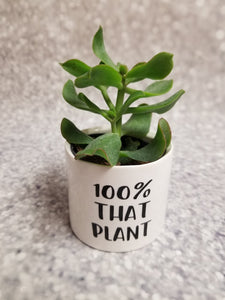 Set of 3 Punny plant pots PLANTS NOT INCLUDED Ceramic pots with cheerful funny sayings on them - My Other Child