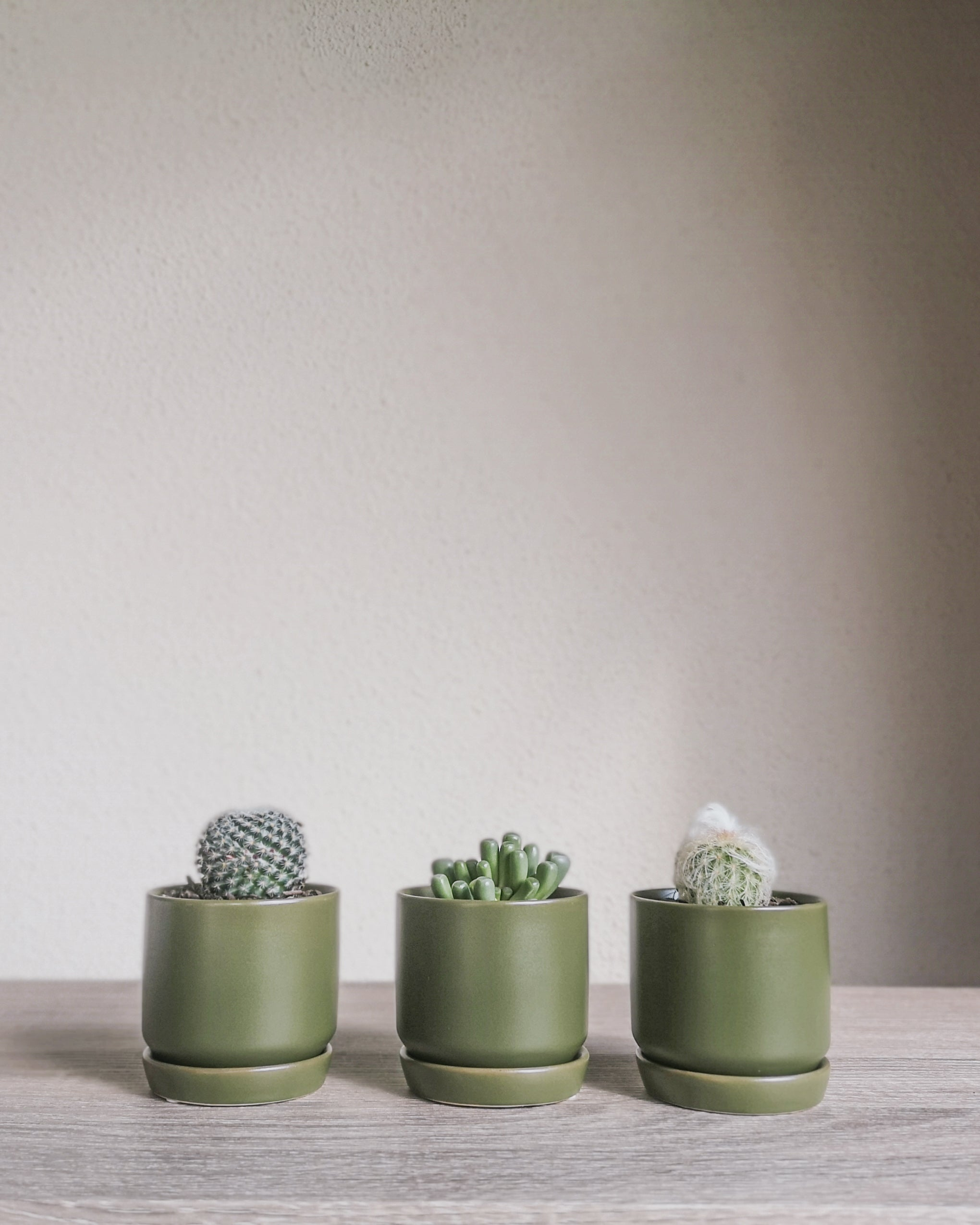 Assorted Cacti + Succulents Trio Set Potted