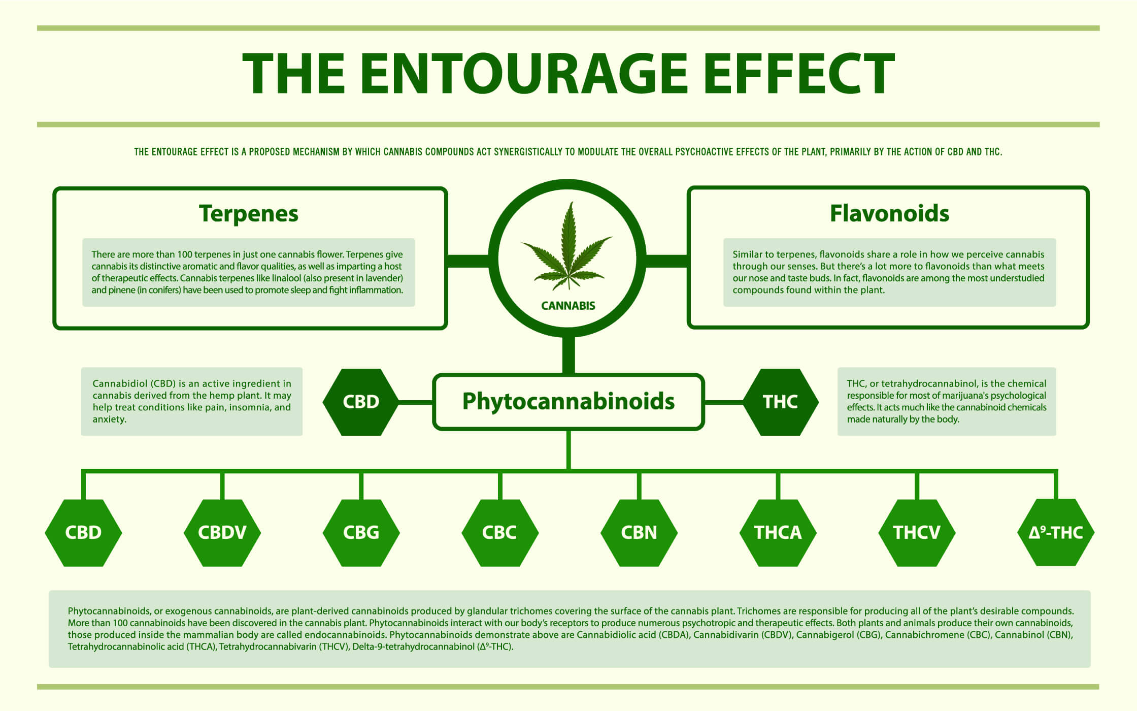 ENTOURAGE EFFECT CBD OIL
