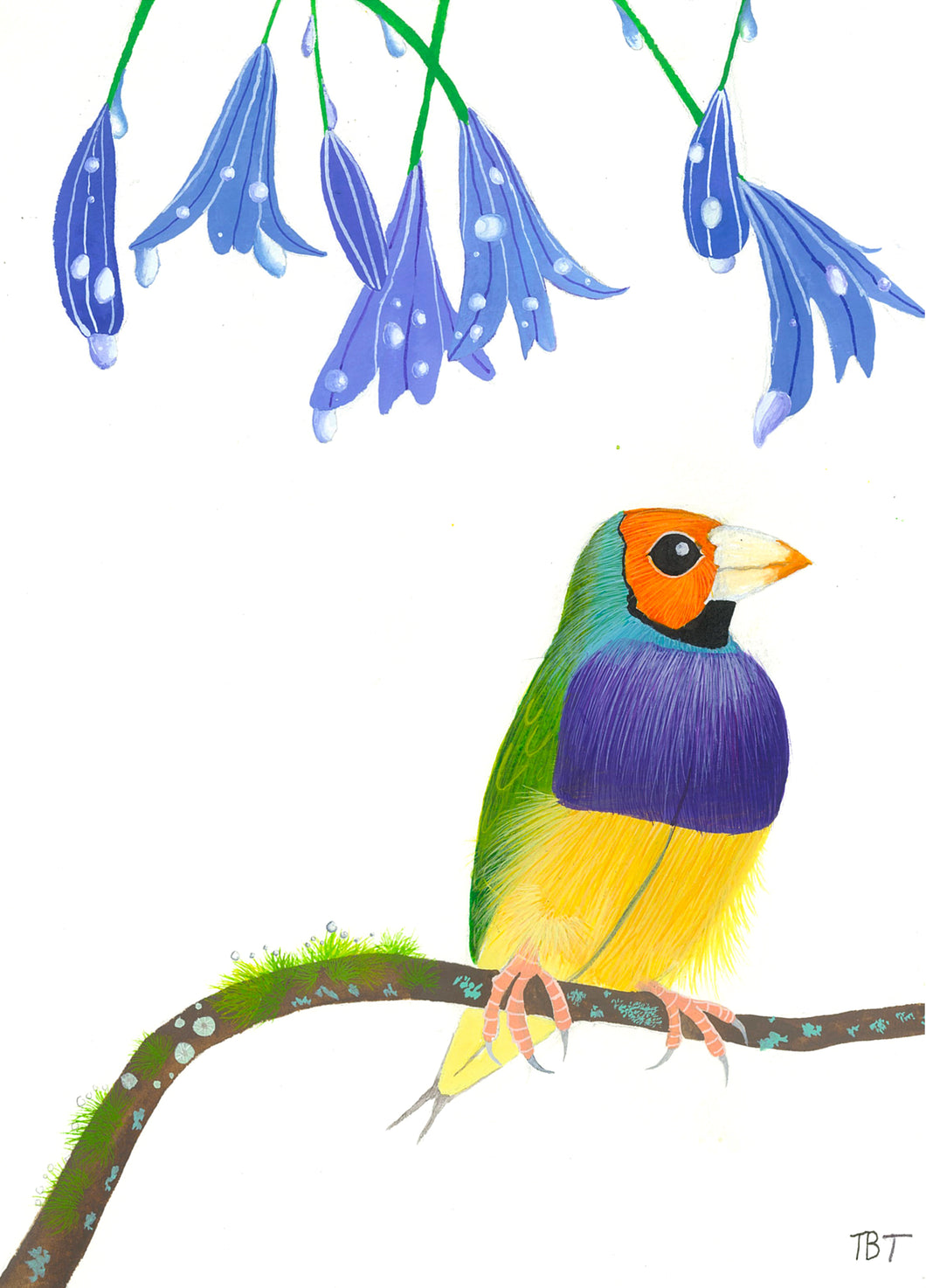 Gouldian Finch under Agapanthas