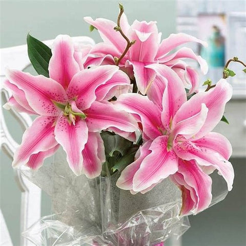 Cheap 100pcs Special Blue Heart Lily Plant Potted Bonsai Plants Lily Flower For Home Garden Purify Indoor Air Mixing Color