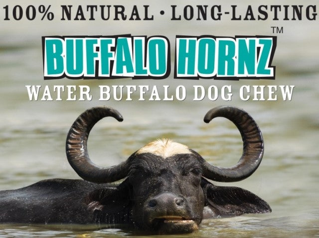 QT Dog Buffalo Hornz - 100% Real Water Buffalo Horn Dog Chew - Medium