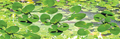 "JTT Scenery Products 95537 - HO Scale - Lily Pads 3/4"" 12/pk"