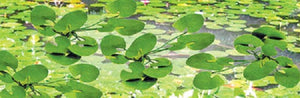 "JTT Scenery Products 95538 - O Scale - Lily Pads 1-1/2"" 9/pk"