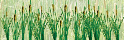 JTT Scenery Products 95536 - O Scale - Cattails, 1-1/2