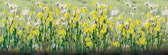 "JTT Scenery Products 95543 - HO Scale - Daisies 1/2"" 24/pk"