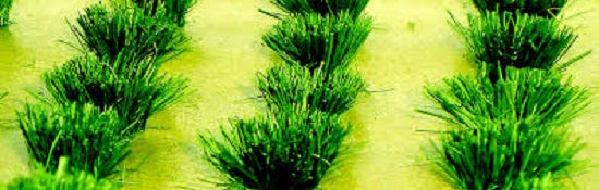 JTT Scenery Products 95580 - HO Scale - Grass Bushes 30pk