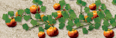 JTT Scenery Products 95532 - O Scale - Pumpkin Plants 6/pk