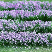 "MP Scenery Products 70210 - Lavenders 5"" x 6-1/8"" sheet, 1/pk"