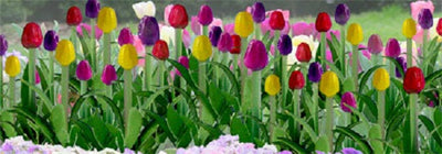 JTT Scenery Products 95555 - O Scale - Tulips 1